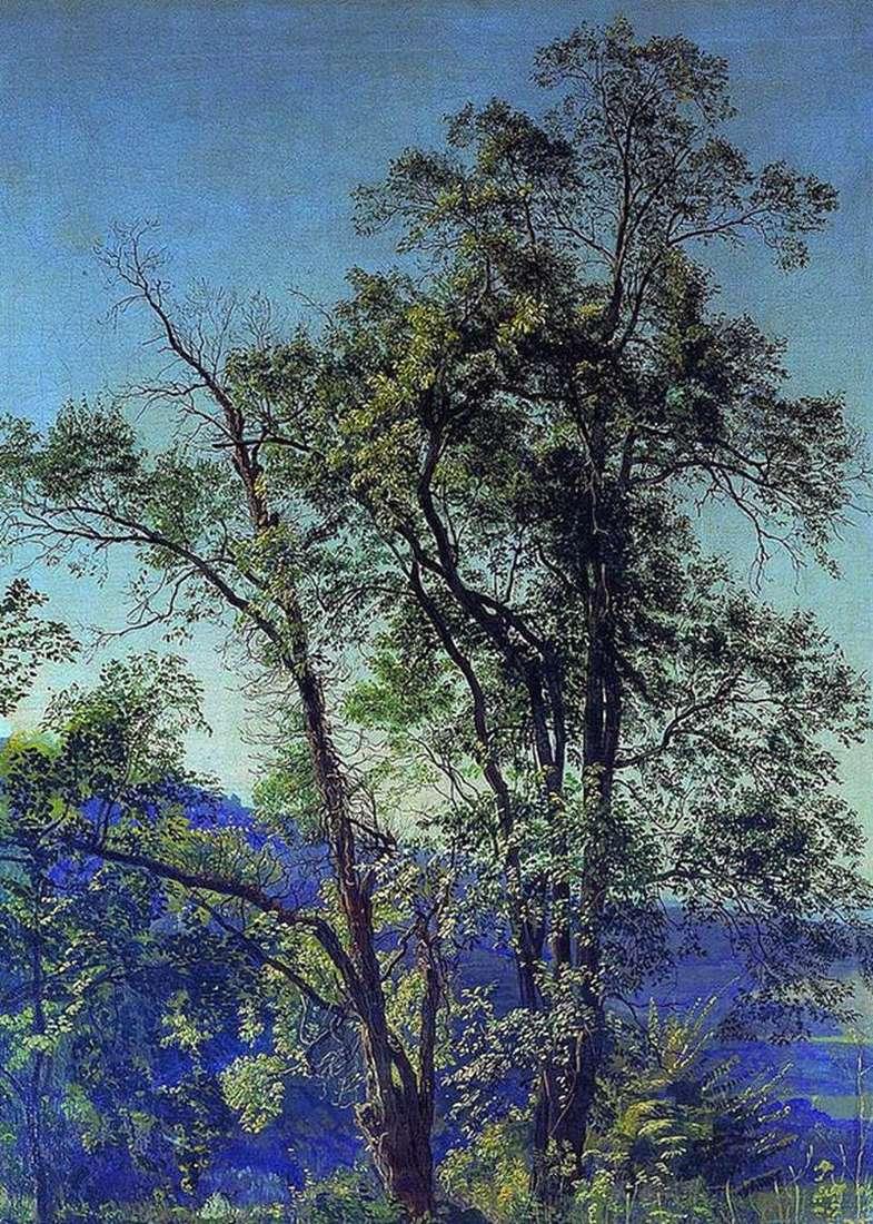 Оливкове дерево. Долина Аричча. У парку Аричча   Олександр Іванов