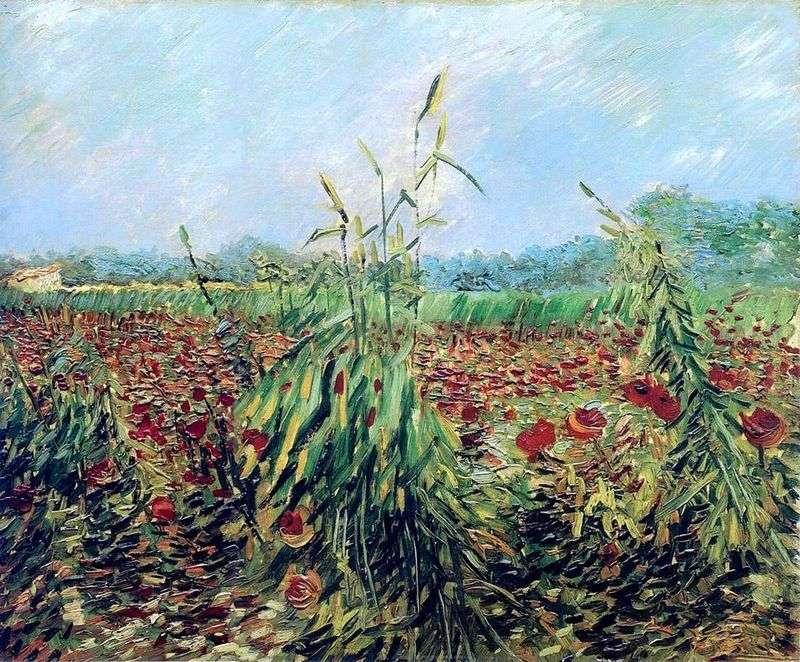 Зелені колоски пшениці   Вінсент Ван Гог