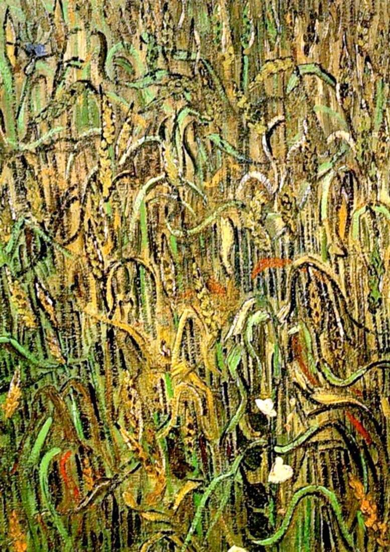 Пшеничні колоски   Вінсент Ван Гог