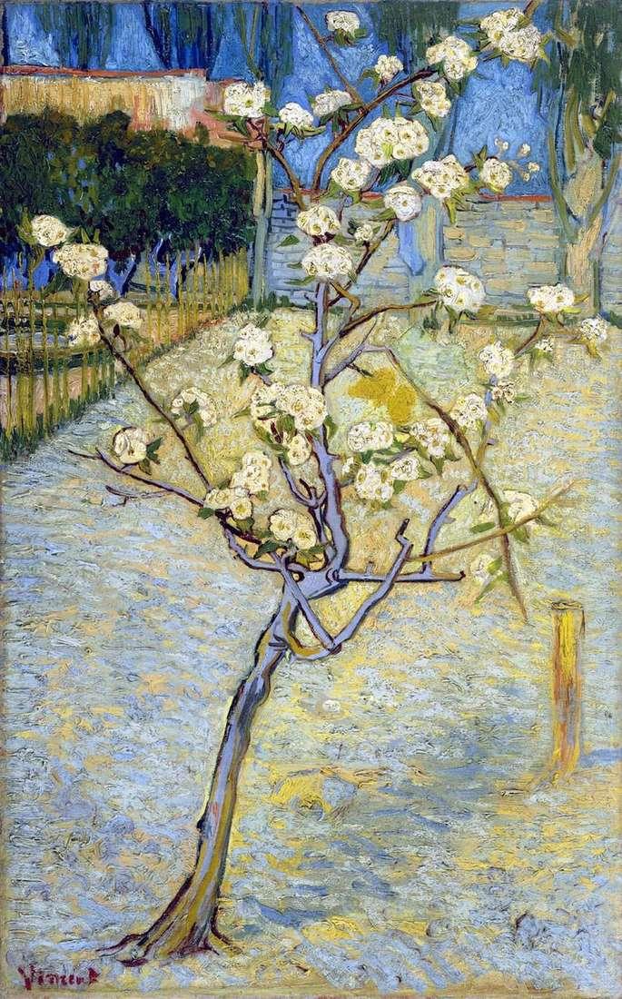Квітуча груша   Вінсент Ван Гог