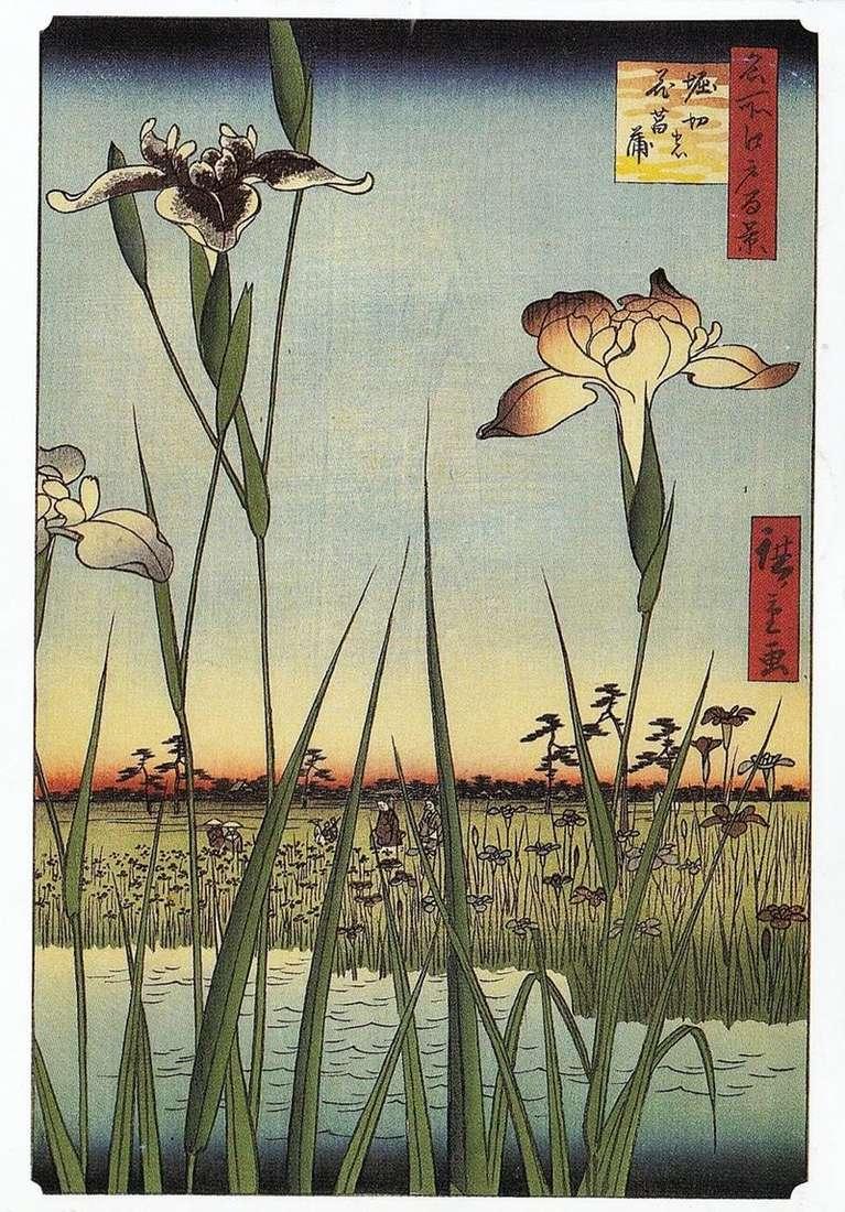 Іриси в Хорикири   Утагава Хиросигэ