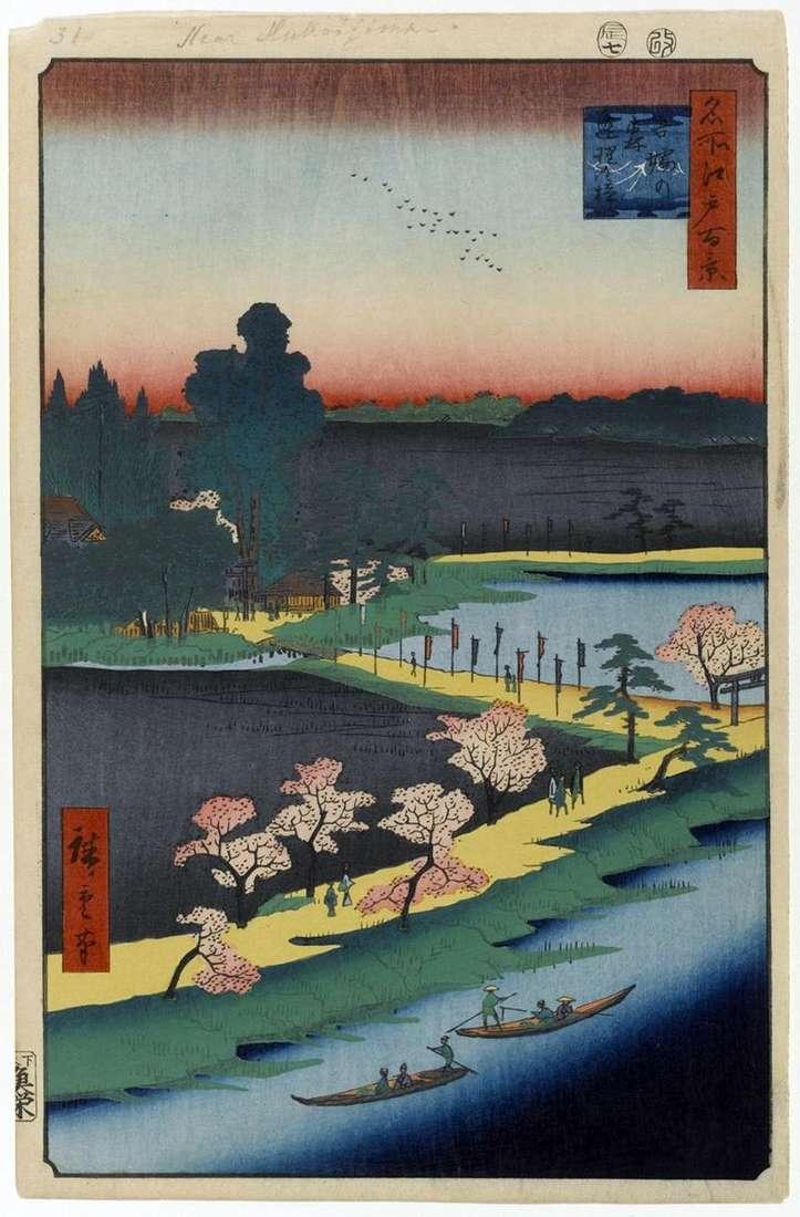 Зрощені камфарние дерева біля святилища Azuma але морі