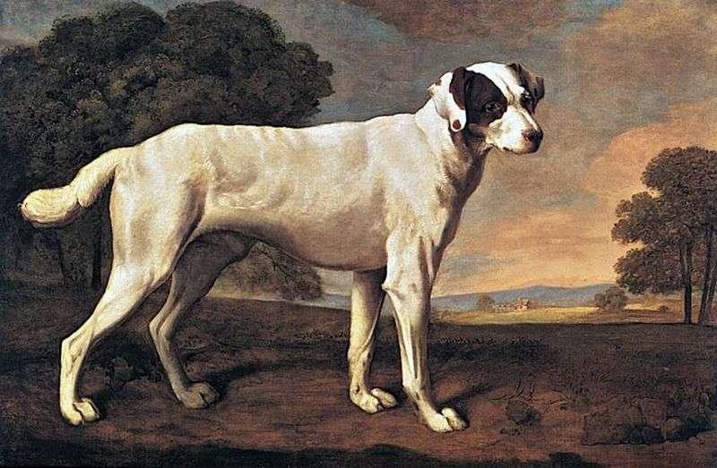 Портрет собаки в Гэттон парку   Джордж Стаббс