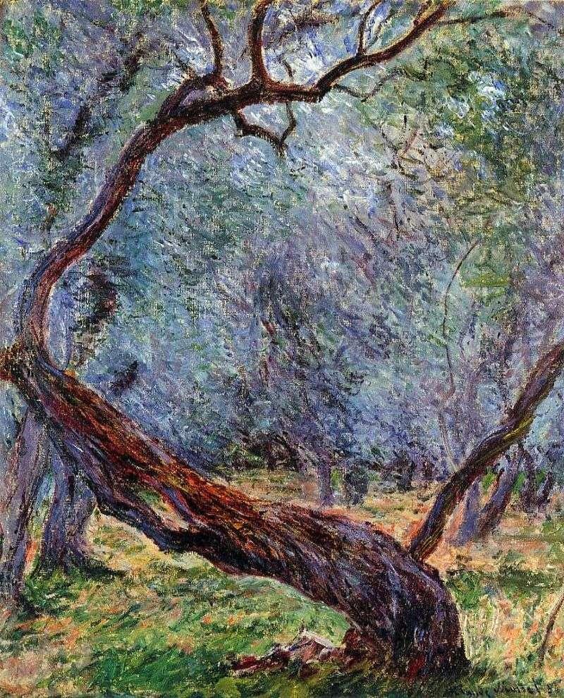 Штудія оливкових дерев   Клод Моне